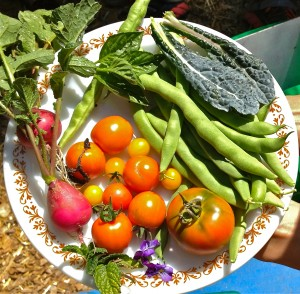 GOOD FOOD NEWS! USDA Allots $34.3 M for Local Foods Infrastructure, Veg & Fruit Access